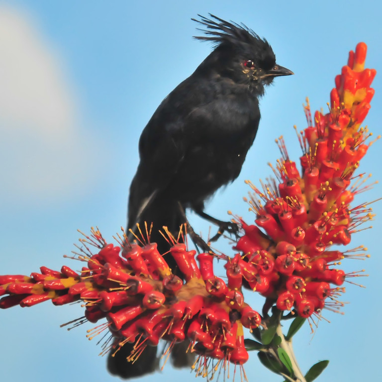 black bird on red flower
