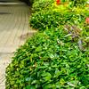 green plants in pots on city street