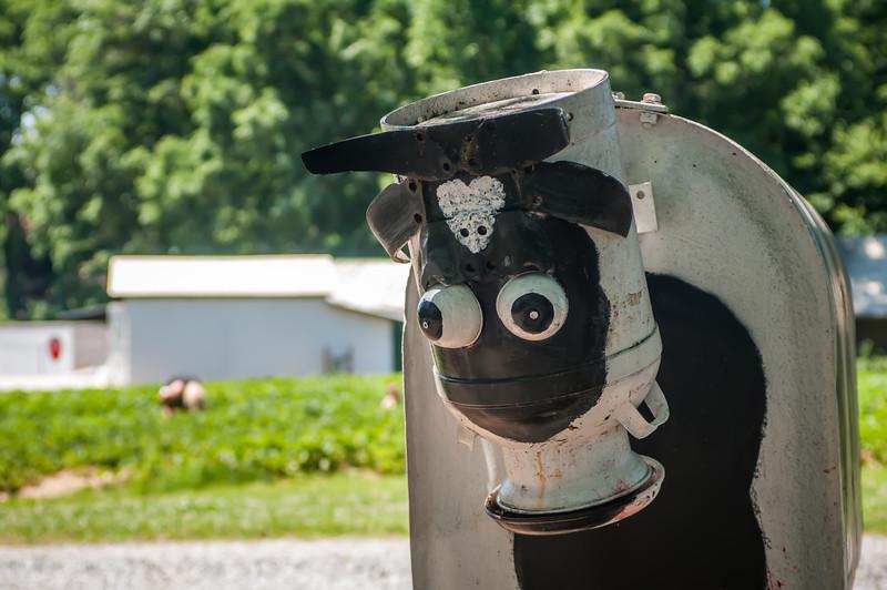 metal cow on farm