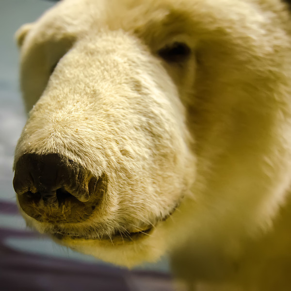 a portrait of a polar bear