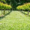 vineyard farm