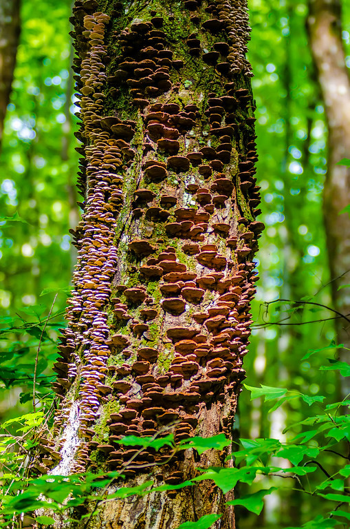mushrooms growing on a live tree in the forest, illustrating the symbiosis and interaction of various living things.