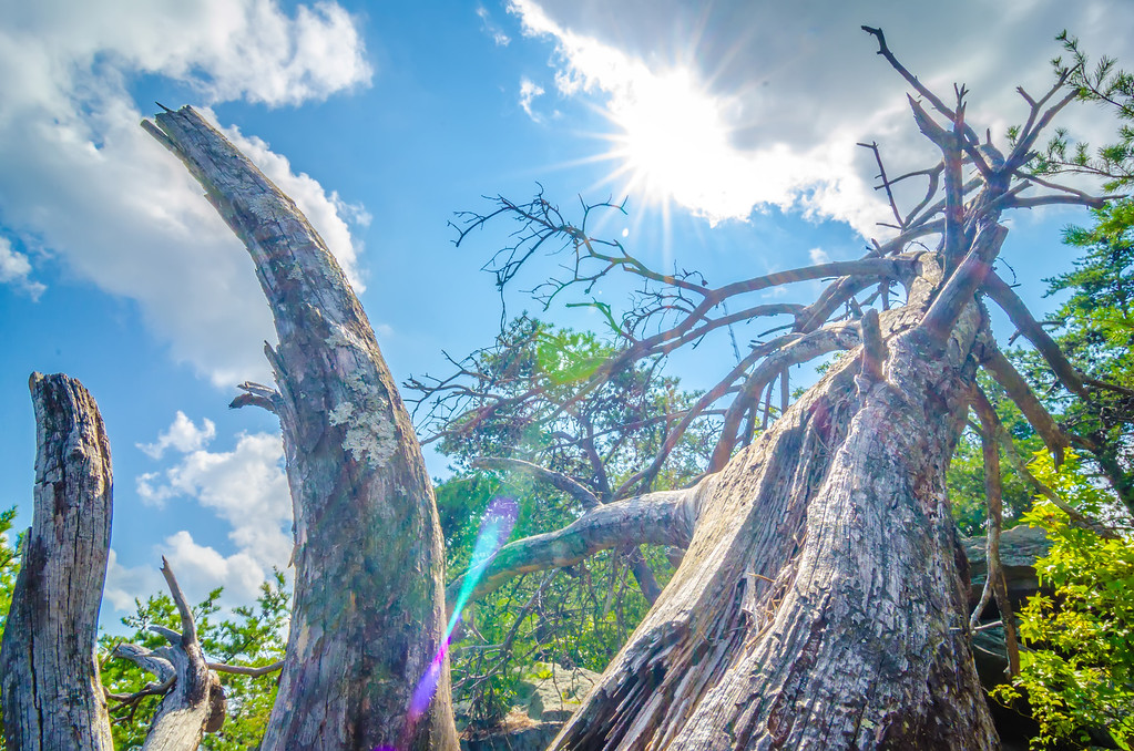 old and ancient dry tree on top of mountain