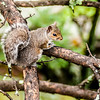 squirrel in the wilderness in the north carolina mountains