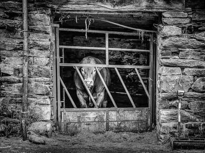Keep The Gate Closed