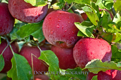 1010_Apples & fall views_037