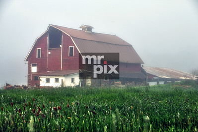 Old Dairy Barn, in the valley - photo: © michael moore - MrPix.com