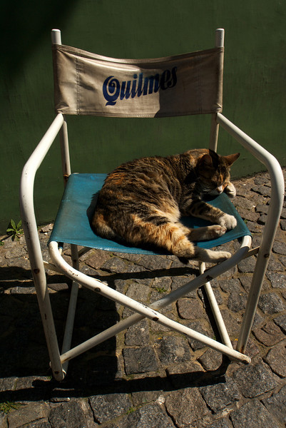 BUENOS AIRES. LA BOCA. A CAT IN A QUILMES BEER CHAIR.