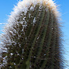 TAFI DEL VALLE. CACTUS WITH SNOW. [2]