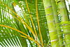 Green Palm Tones