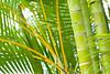 Green Palm Tones