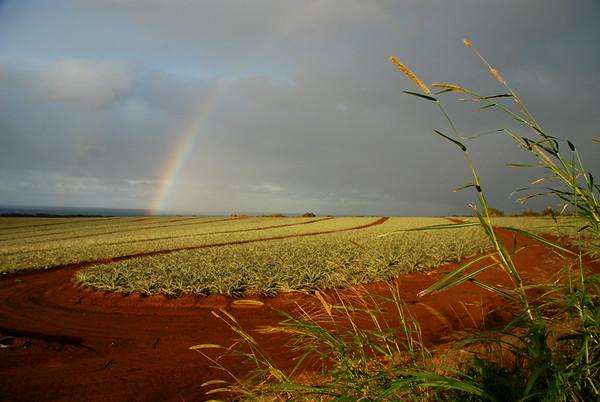 Rainbow over Pineapple
