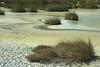 kealia pond tufts