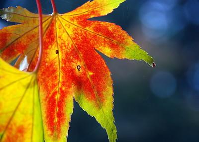 Autumn Essence