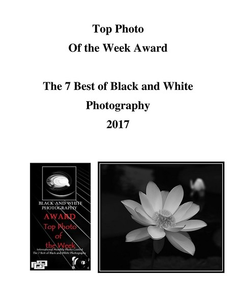 Top Photo Award