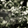 Spider in its web. Waiting