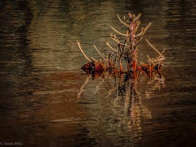 3-5-2021: Dead in the water