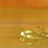 Palms full of prayers  - Water Drop Clam