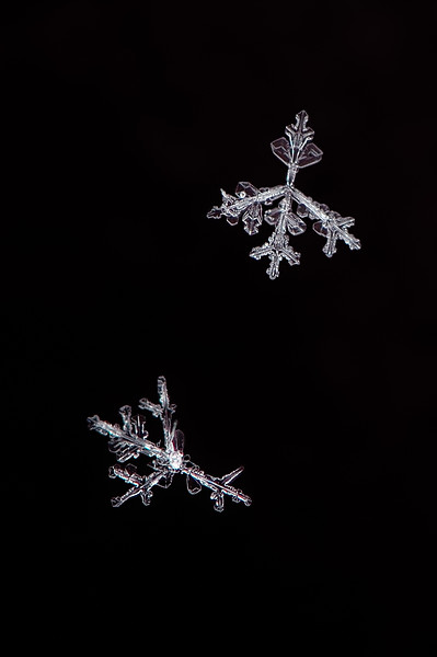 Snow Flake - Arrow