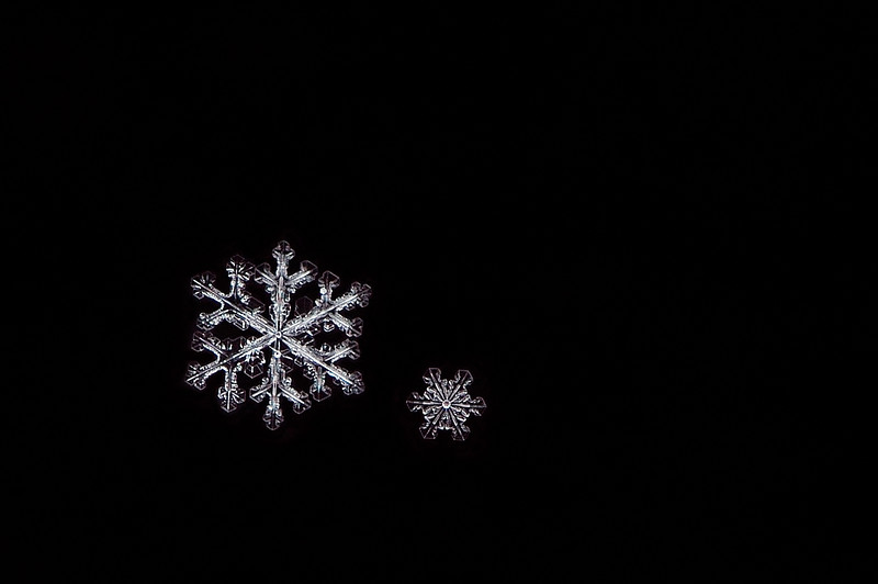 Snow Flake - Diamonds