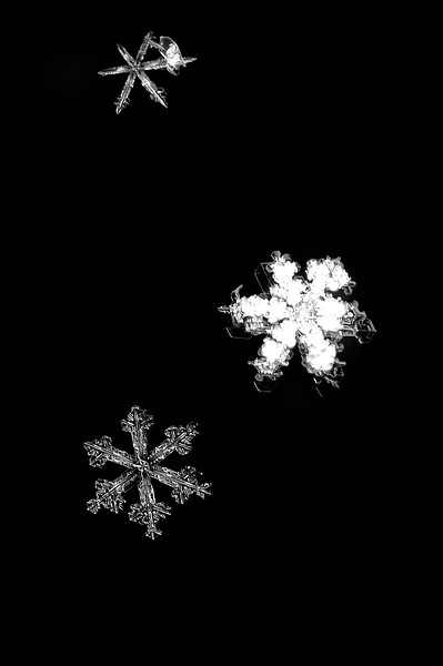 Snow Flake - Perfection and Misfits
