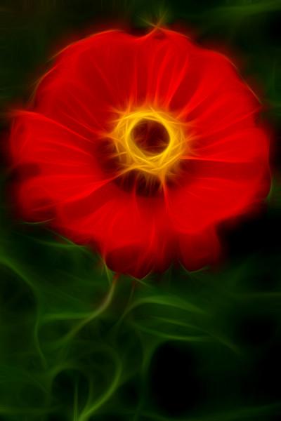 Flower from Kashmir in flames.