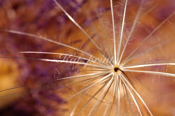 Close-up of an artichoke flower