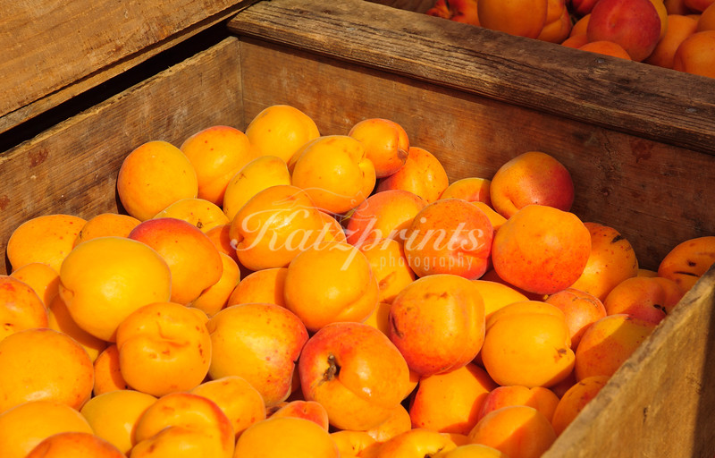 Apricots in wooden crates at local Farmer's market