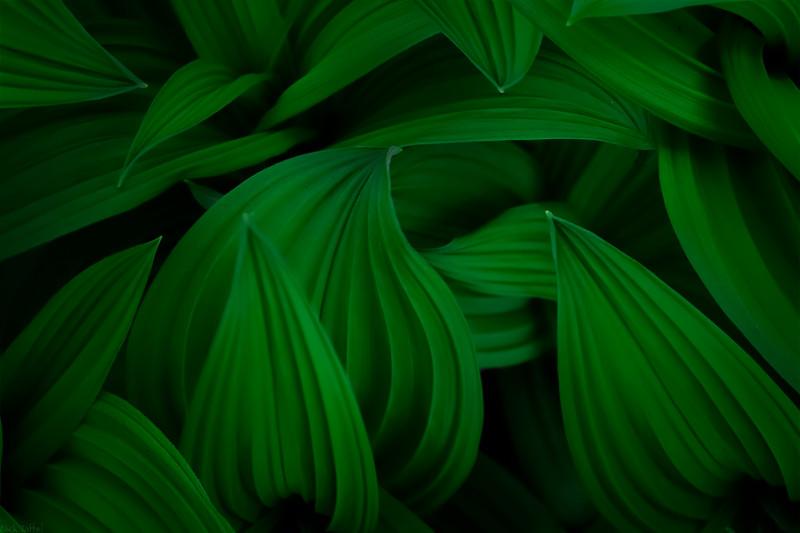 Green with Envy - Waterton National Park, Alberta