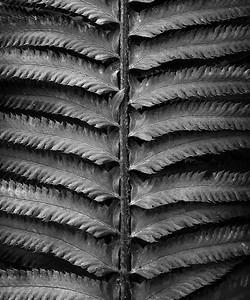 Natural Detail