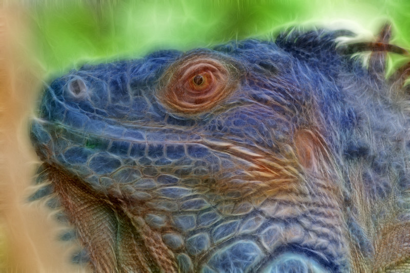 Close up shots of the iguana at Bali Zoo.<br /> Bali Zoo, Singapadu (near Ubud), Bali. Situated in the cultural heart of Bali, the zoo is only 15 minutes drive from Ubud, and 45 minutes from the tourist areas of Kuta.