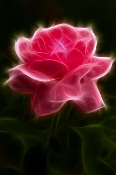 Flaming flower from Kashmir.