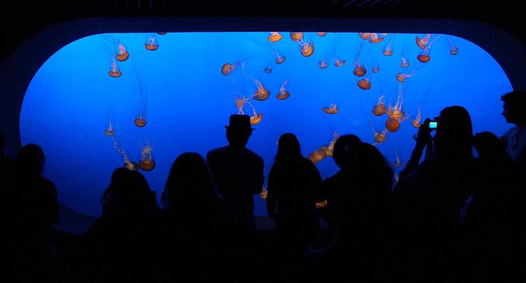 Jellyfish at Monterey Aquarium. Due to low light, photograph taken at 1600 ISO