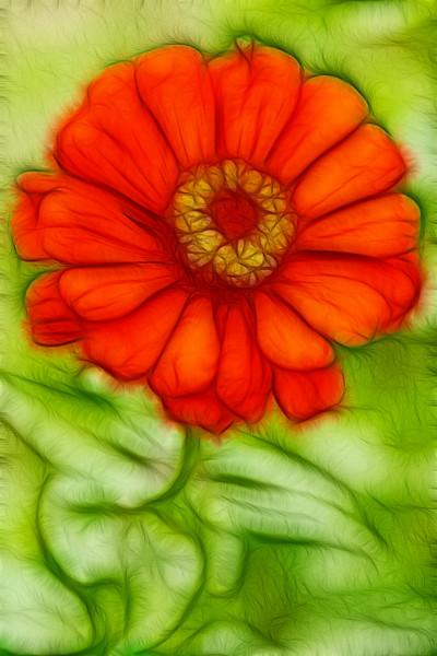 Flower from Kashmir.