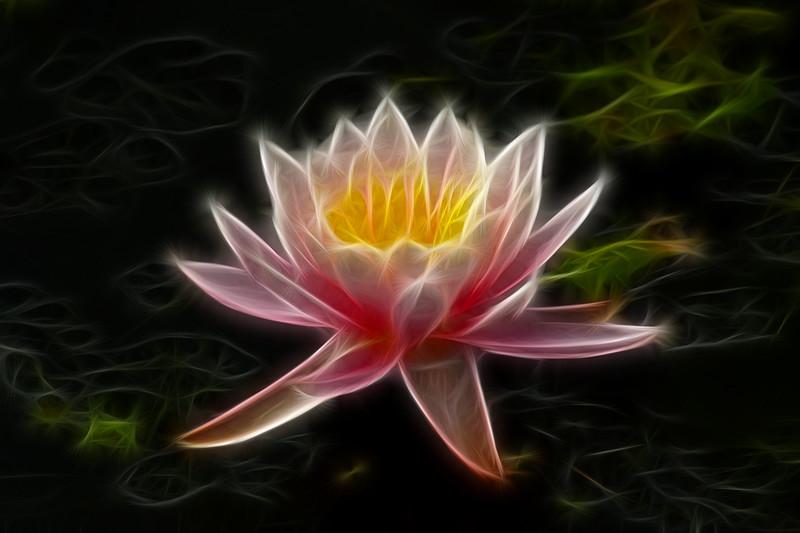 Flaming flower.