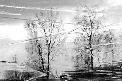 Ice Reflections
