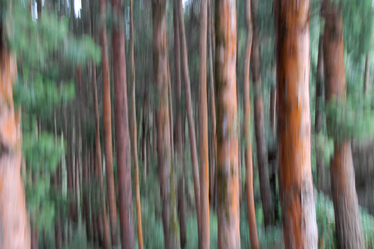 Abstract - Forest & trees. Ooty, Tamil Nadu, India July 2007