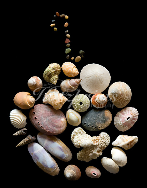 Seashells, coral, and pebbles from my collection are arranged as a globe and photographed.
