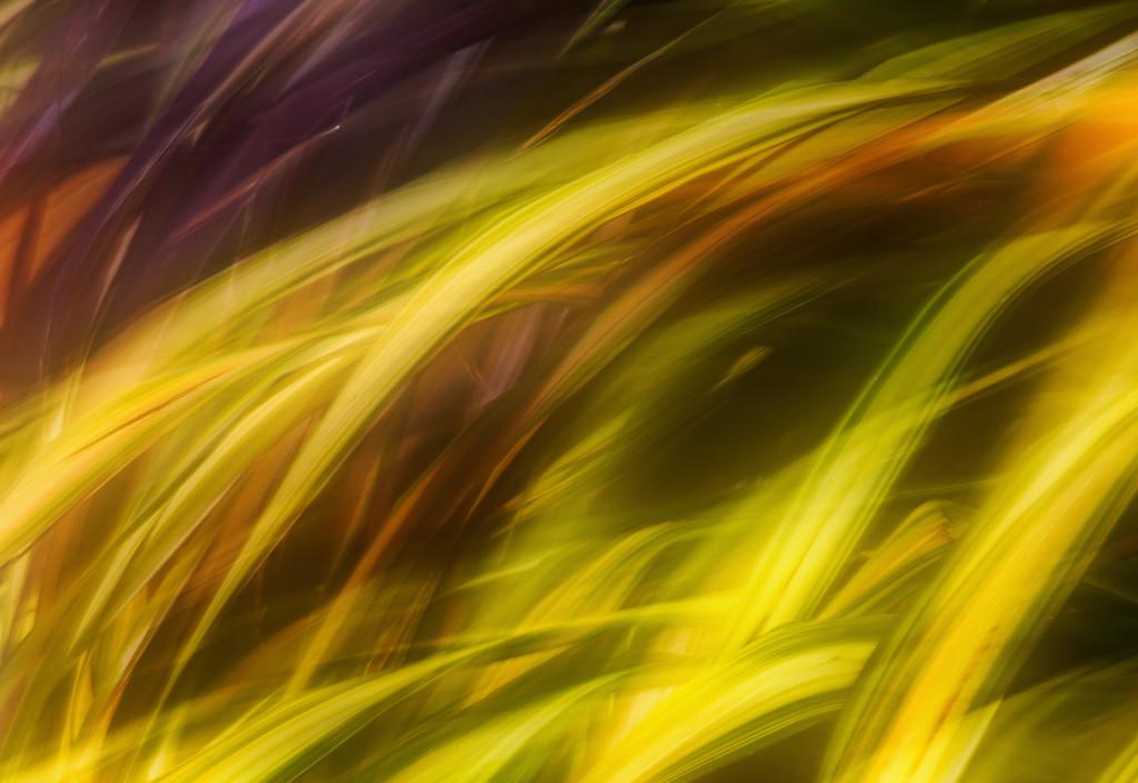 Threads of Consciousness