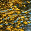 aspen ripples
