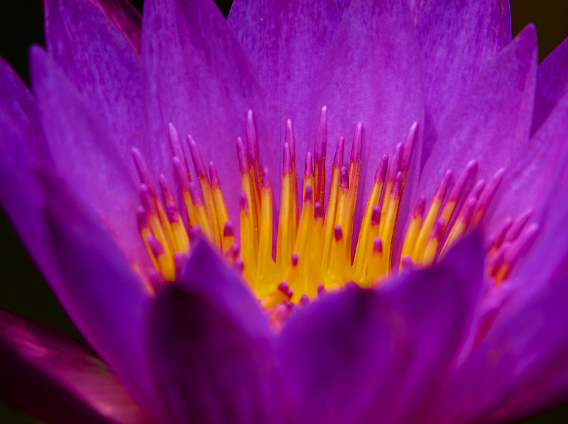 Flower Macro #5, Zilker Botanical Gardens - Austin, Texas