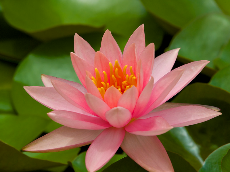 Flower Macro #6, Zilker Botanical Gardens - Austin, Texas