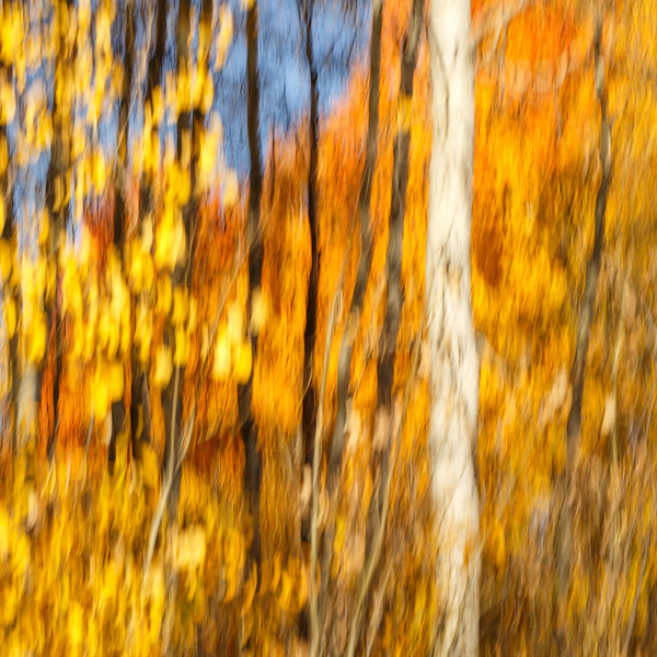 Study In Abstract No. 19S, Grand Teton NP