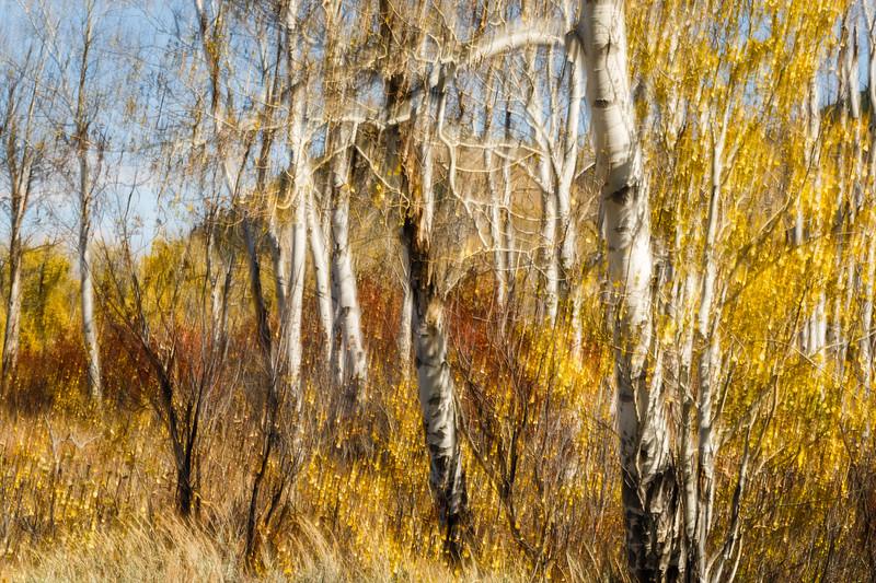 Study In Abstract No. 14, Grand Teton NP