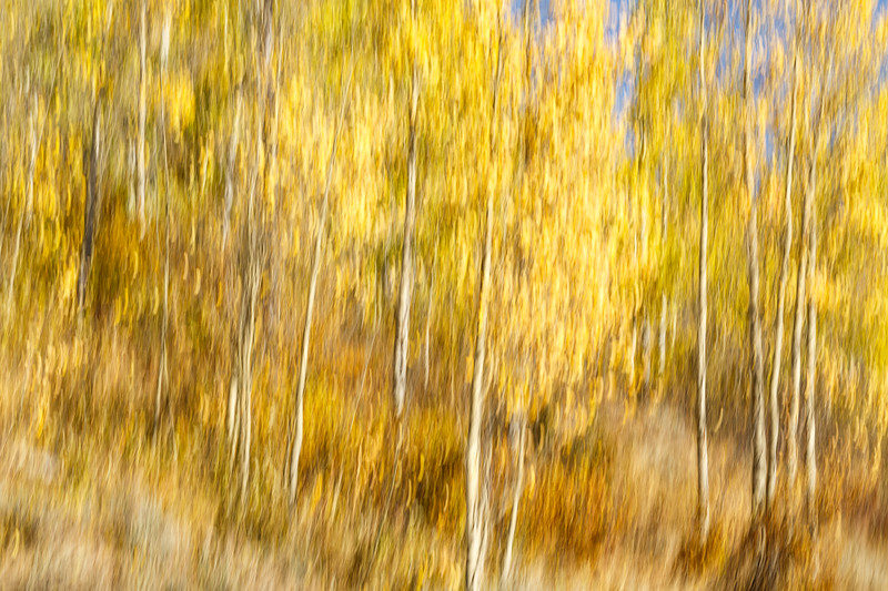 Study In Abstract No. 9, Grand Teton NP