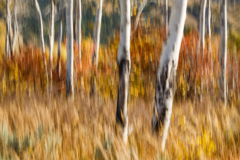 Study In Abstract No. 12, Grand Teton NP