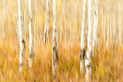 Study In Abstract No. 7, Grand Teton NP