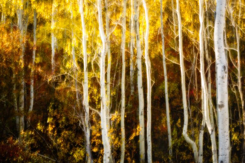 Study In Abstract No. 27, Grand Teton NP