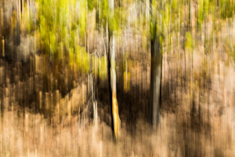 Study In Abstract No. 19, Yellowstone NP