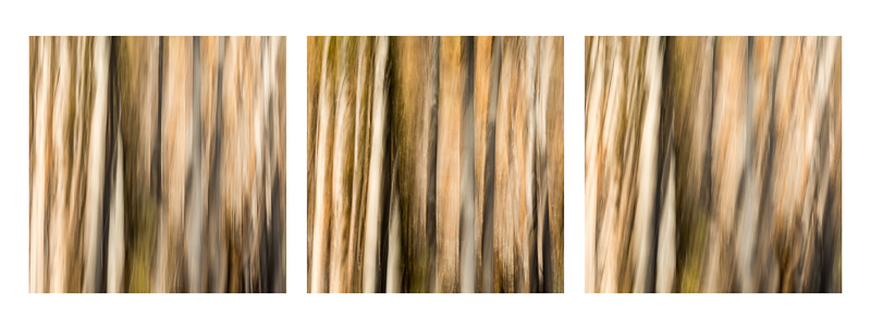 Study In Abstract Nos. 273, 274, 275, YNP (Composite)